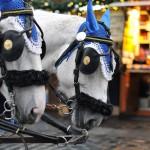 Due Cavalli per le vie di Praga