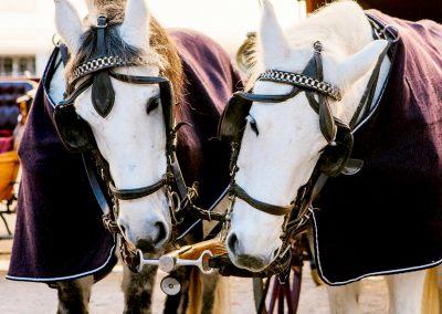 salisburgo-capodanno-cavalli